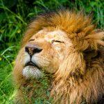 Leo y el horóscopo de la vitalidad