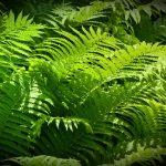 Plantas que atraen la buena suerte y la energía positiva