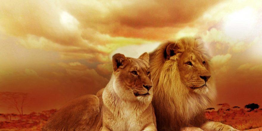 enamorar a leo