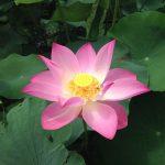 Descubre las Flores y Plantas para Piscis