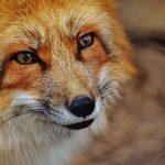 El animal que representa a cada signo del zodiaco